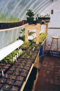 Surprising Container Grown Vegetables Solar Gem Greenhouses